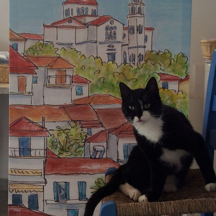 Horis the Studio Cat in action!