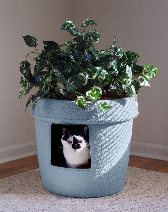 This NEW Dusty Blue Hidden Litter Cat Box has the look of luxurious pottery and is justifiably the most attractive litter box of today with its hand textured exterior. Color will vary on monitors so actual color may not match exactly viewed color.   DIMENSIONS  Inside top dia. is 17 inches Inside bottom dia. is 15 inches Height is 17 inches excluding plant. Outside top dimension is 19.5 inches  Cat pictured weighs 14 Lbs.   Hidden Litter system contains:  1. Planter base 2. False top 3. Two…