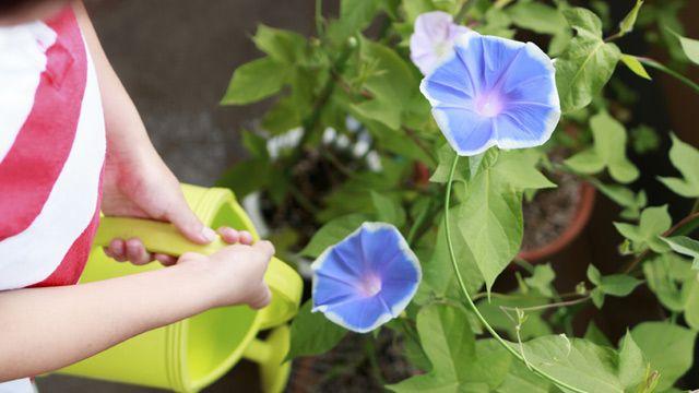 Blühende Kletterpflanzen eignen sich gut als Sichtschutz. (Quelle: Thinkstock by Getty-Images)