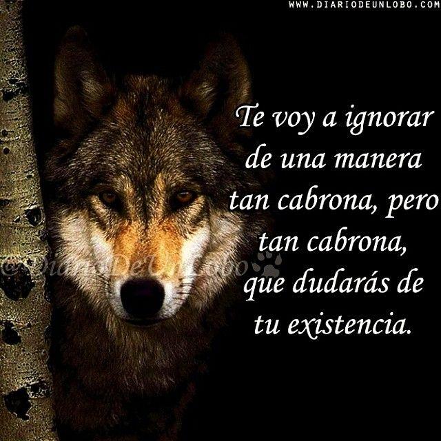 Imágenes de lobos con frases | Imágenes con frases