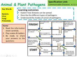 Best 25 a level biology ideas on pinterest biology a level a new ocr a level biology plant animal pathogens lesson fandeluxe Gallery