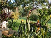 Kerikeri Accommodation Bay of Islands Northland NZ. 5 eco cottages nestled in lush subtropical garden.  www.wharepuke.co.nz