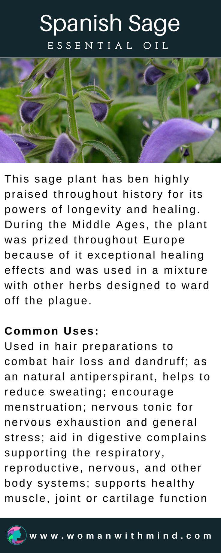 Spanish Sage Essential Oil Guide & Application #essentialoils