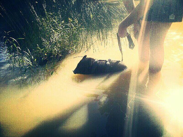 Taking a swim..