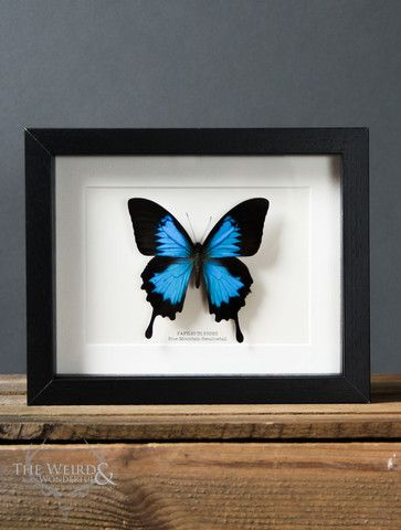 The 21 best Entomology Frames at The Weird & Wonderful images on ...