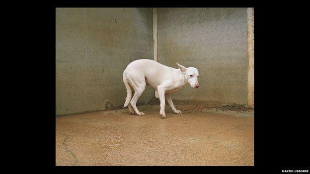 Las tristes imágenes de los perros de caza abandonados en España - BBC Mundo