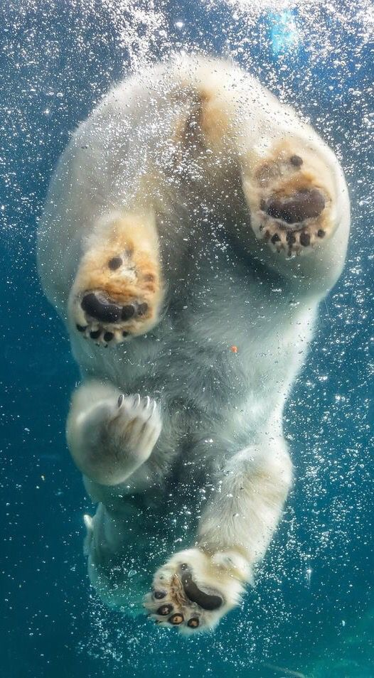 Polar bear swim ✿⊱╮                                                                                                                                                                                 More