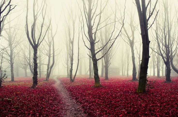 15мистических лесов, вкоторых хочется заблудиться