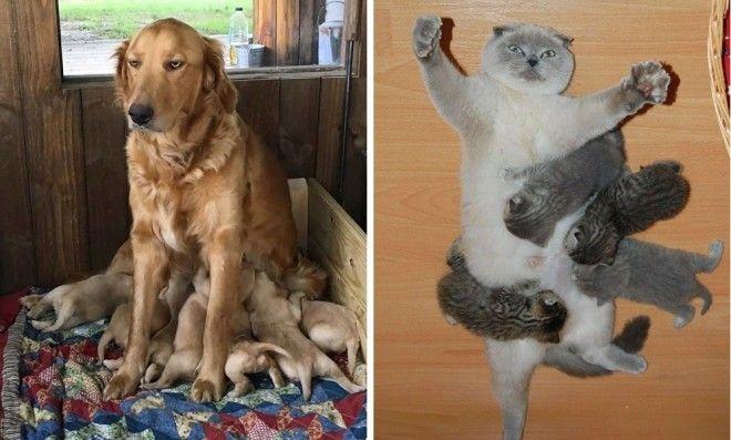 Zvířecí maminky poznávají, jak náročná dovede být výchova vlastních potomků - Evropa 2