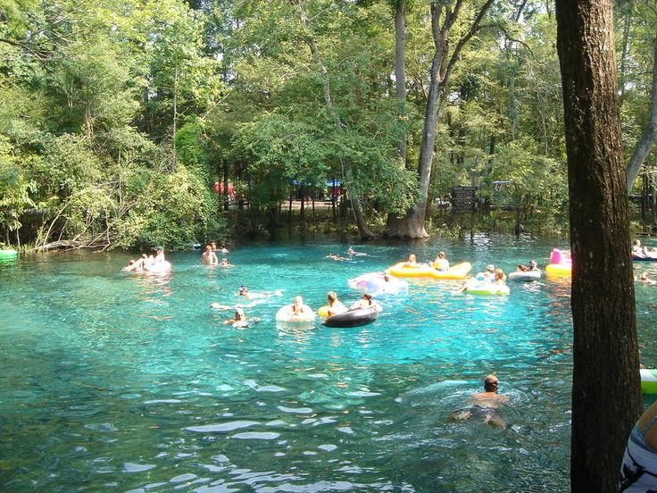 38 Best Ginnie Springs Images On Pinterest Diving
