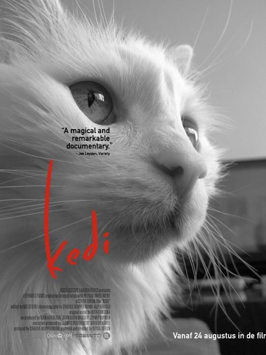 Avalon is on the movie poster of Kedi: Cats in Istanbul. You can make a movie poster with you own cat at http://www.kedifilm.nl/poster/