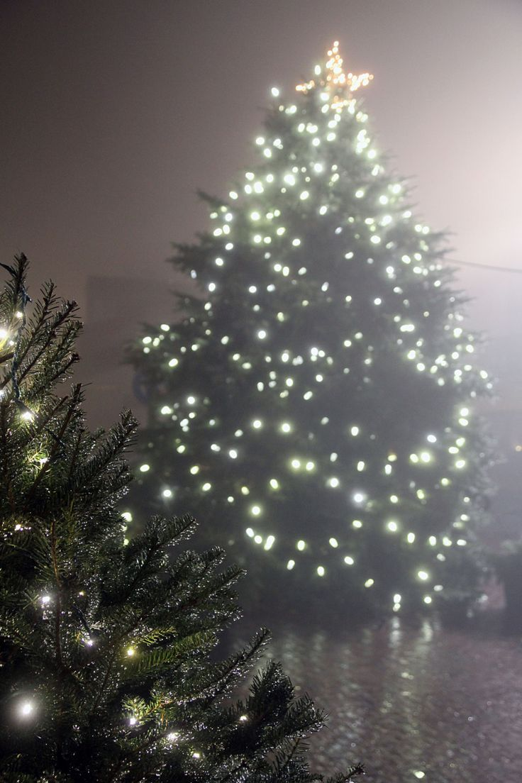 lighted tree in a mist - White Outdoor Christmas Tree