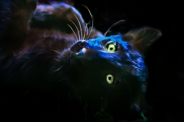 Baby black panther by pattoise, via Flickr