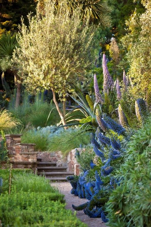 Like the colours and some drought tolerant plants (but maybe not such dense planting!). Beautiful coastal gardens  can be created with attractive, salt and drought tolerant plants. Here we have planted Echiums, olives and native Australian grasses. For more garden ideas and inspiration see: http://www.diggers.com.au/about-us/garden-ideas.aspx