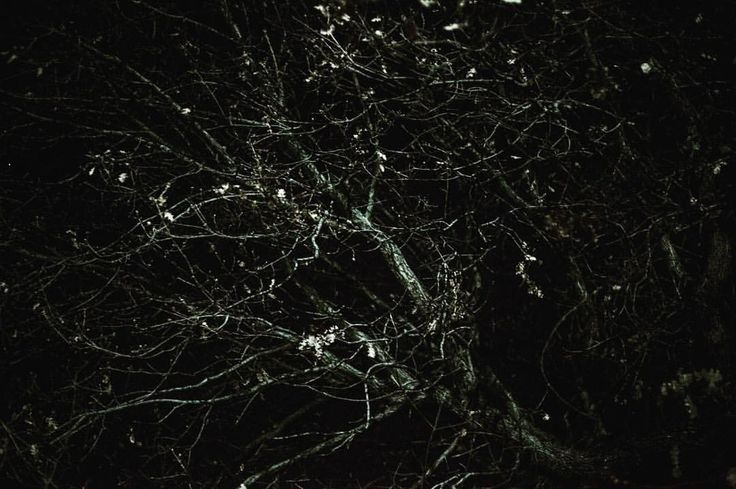 memories made in the coldest winter #nightcrawler #nature #tree
