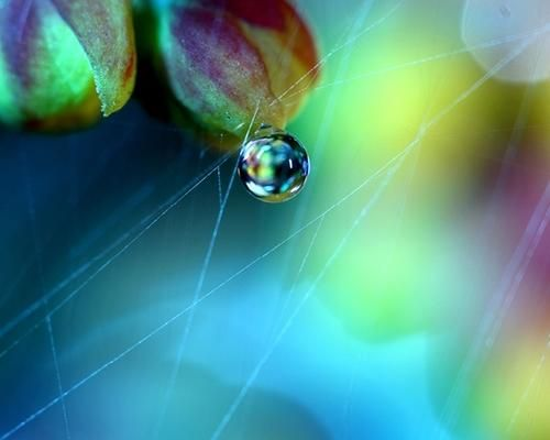 Best Colour Beauty Images On Pinterest Dew Drops Rain And - Amazing images captured tinniest water droplets