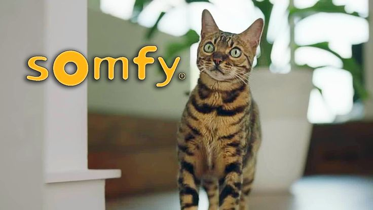 Kaiser the Bengal Cat - Somfy Commercials
