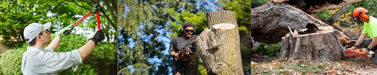Long Island Lumber Jack tree service is the most qualified tree service Raleigh has to offer for your tree service project. Are provide Tree Removal services Long Island , Long Island Tree works, Removal land clearing and Affordable Tree works ... call us: (631) 244-9098