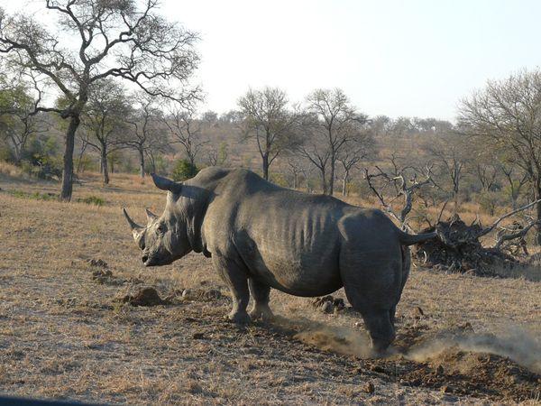 Tim Brown Tours | Durban Tours and Safaris  http://www.timbrowntours.com/