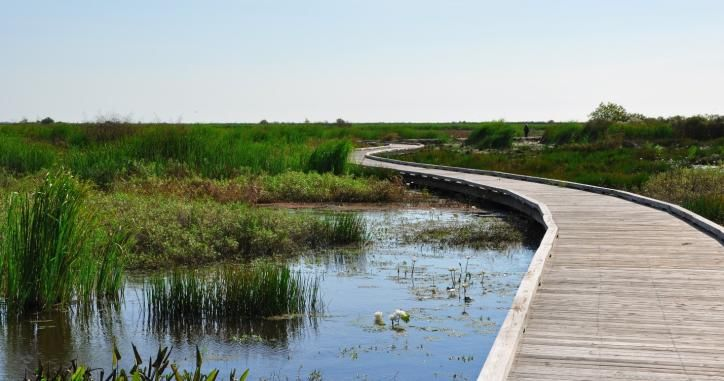 6 Things to Do on Sundays in Lake Charles/Southwest Louisiana