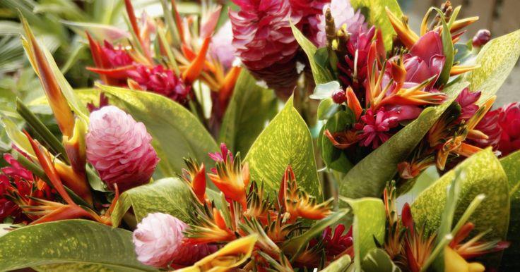 Flores tropicais: coloridas e exuberantes!. Coloridas e exuberantes, as flores tropicais também são conhecidas pelas formas espetaculares e boa fragrância. Elas florescem em áreas tropicais do planeta como a África do Sul, o Havaí e, é claro, o Brasil. Por estarem acostumadas com o clima tropical, essas plantas não toleram invernos rigorosos. Em locais do País com clima ameno, elas costumam ...