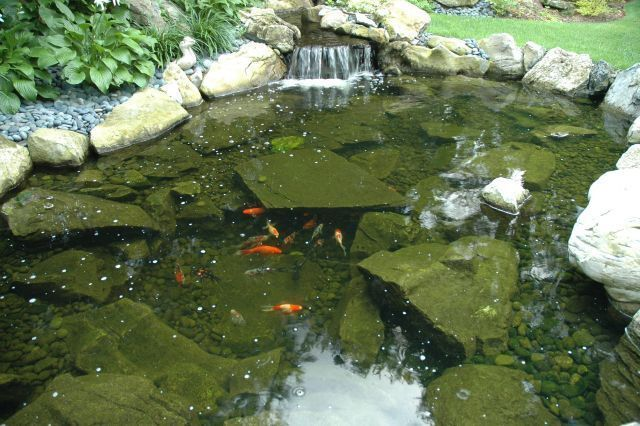 34 best ponds designed and built by deck and patio company for Koi fish predators