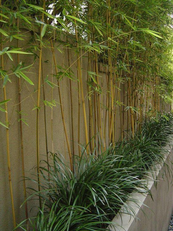 planter des bambous, parterre surélevé de bambous