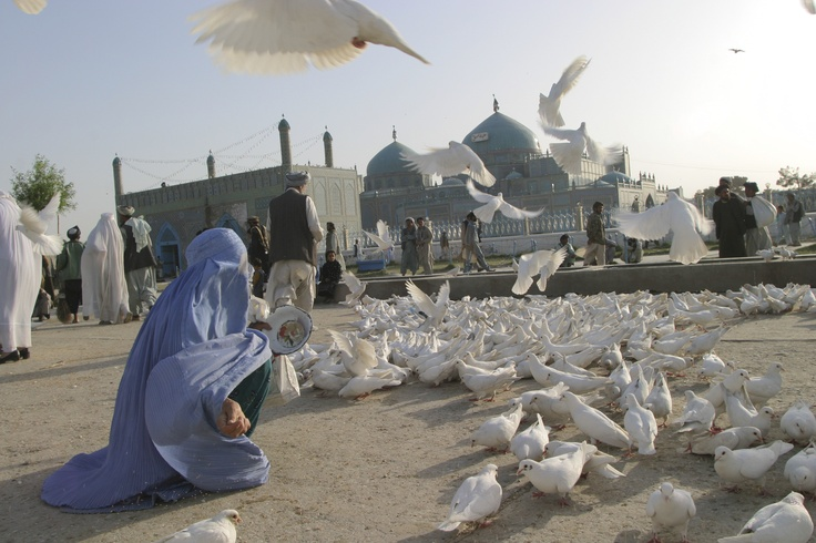 A woman feeds birds in Afghanistan. By David Trilling/Internews