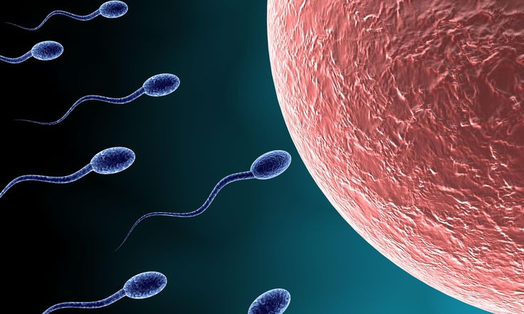 New research proves that it's not just women who can't keep putting off parenthoodResearch from the Beth Israel Deaconess Medical Center and Harvard Medical School confirms that male fertility declines with age. It takes longer for older men to get women pregnant and there's more chance of miscarriag