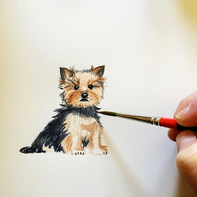 Pin By Chelsea On Simple Drawing Yorkshire Terrier Dog Yorkie