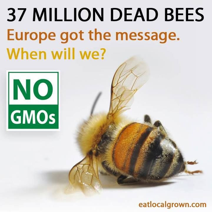 GMOs Kill Bees:  March Against Monsanto's photo. || GMOs are dangerous because of their reliance on chemicals such as RoundUp, not because they're genetically altered.