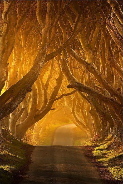 The Dark Hedges, Northern Ireland  photo via dazy