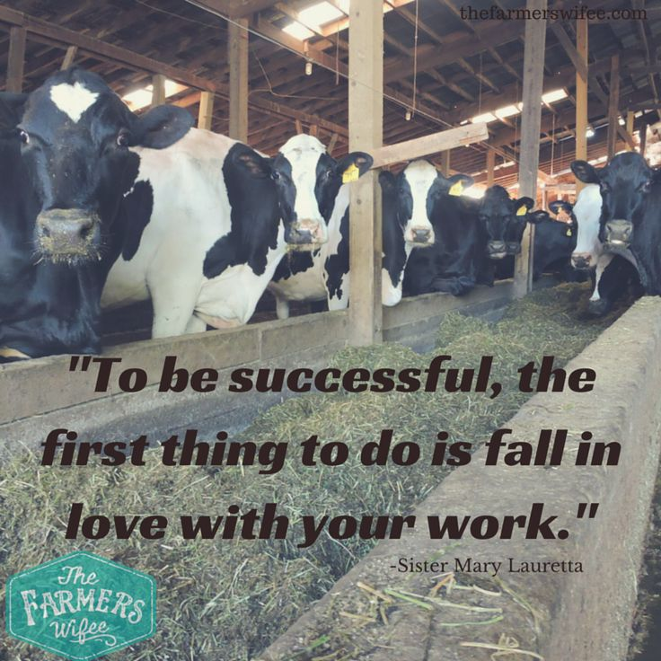 """""""To be successful, the first thing to do is fall in love with your work."""" #quote #dairy #agriculture www.thefarmerswifee.com"""