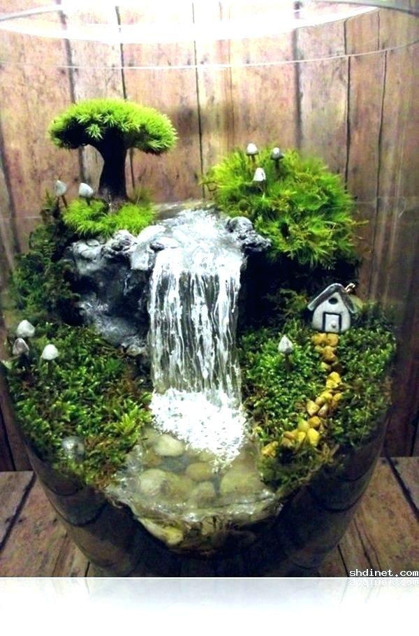 Water Garden Terrarium
