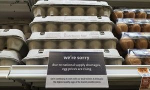 Netherlands to save US after bird flu outbreak by sending egg products