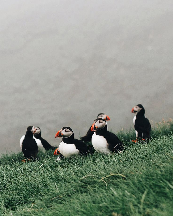 Фарерские острова тупики