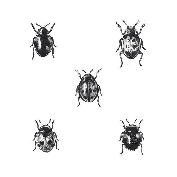 """86 Likes, 5 Kommentare – Kim Ellen (Kim Dodge.ttt) auf Instagram: """"Ladybug #tattoo #dotwork #blacktattoo #flash"""