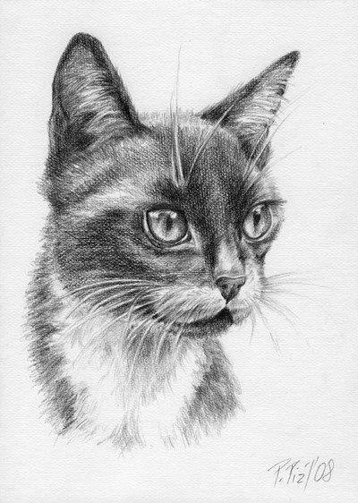 CUSTOM CAT PORTRAIT Original graphite pencil by CanisArtStudio