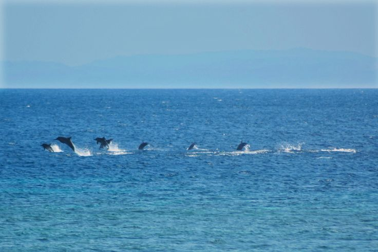 Dolphins at Com