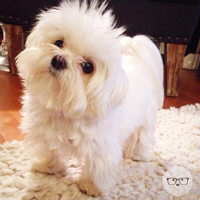 Baroo? Puppy, Dog, Animals