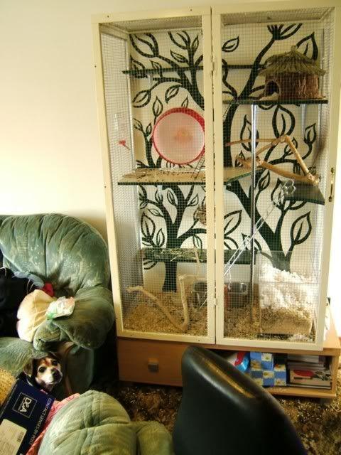 Homemade Degu cage -- Love it for a chinchilla.