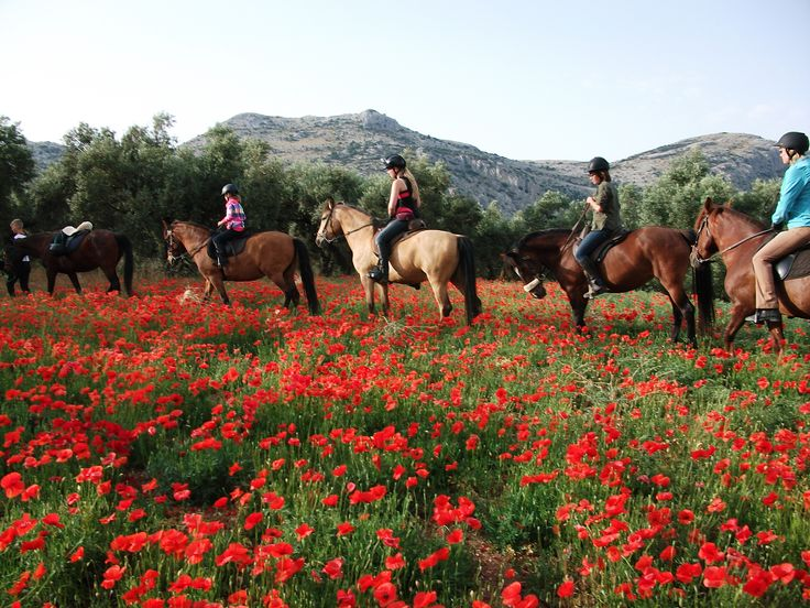 riding throught the poppies