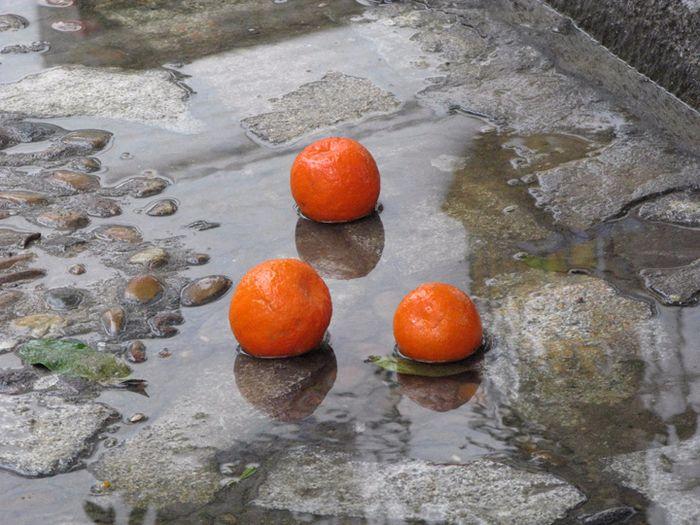сбор апельсин в севилье 11 (700x525, 465Kb)