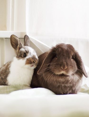 The First bunny is so cute the white-Brown bunny is so aodrable I won't this bunny so bad #FuturePetAlbum _Danyale(Lucy).