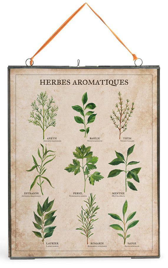 Poster botanique herbes aromatiques — Etsy — 18€