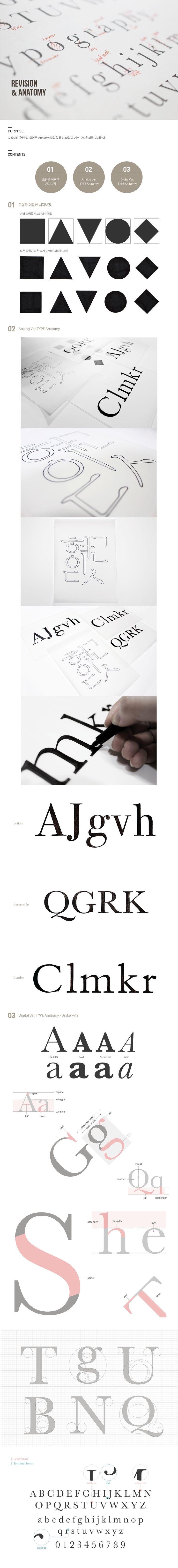 Revision & Type Anatomy