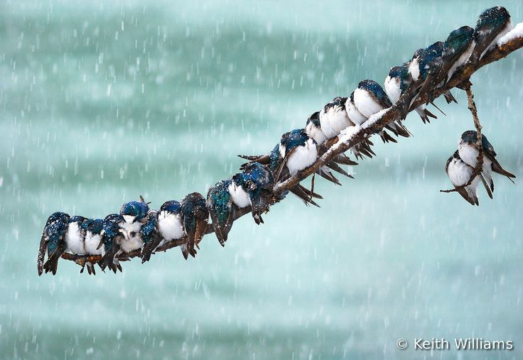 Победители Всемирного конкурса фотографии птиц 2012 | ФОТО НОВОСТИ