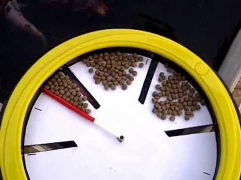 DIY - Automatic Fish Feeder