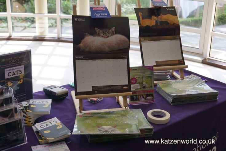 Worldwide Giveaway: International Cat Care Calendar – Beauty of Cats find this amazing photo from Katzenworld  http://katzenworld.co.uk/2015/12/15/worldwide-giveaway-international-cat-care-calendar-beauty-of-cats/