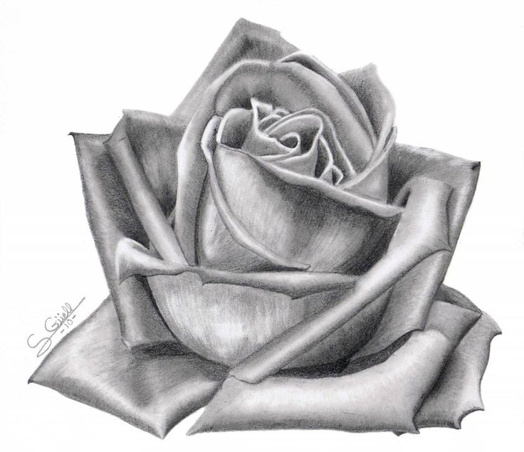 rosa grande | dibujos a lapiz | Pinterest | Dibujo, Google and Search